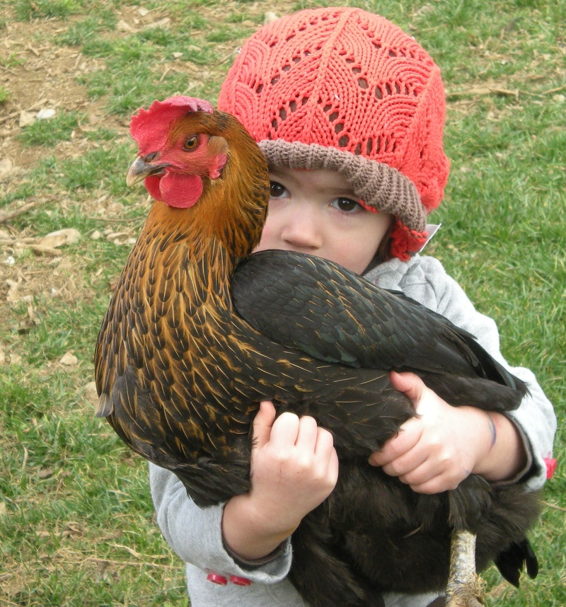 backyard chickens were never an issue for redding folks who had plenty