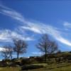 sky and oaks