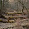 lichen Morguefile