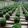 nursery plants Morguefile