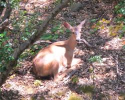 deer nap