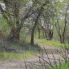 sacramento-river-trail