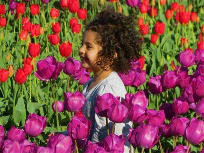 marianne-werner-tulip-joy