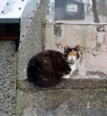 A new neighborcat.