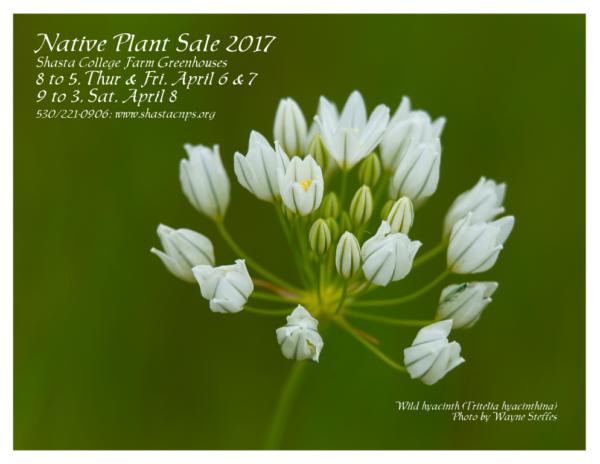 Spring Plant Sale 2017 poster