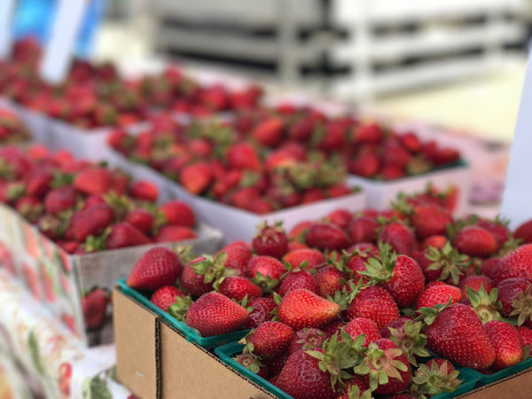 Strawberry fields forever or at least when in they're in season. Photo by Courtney Paige