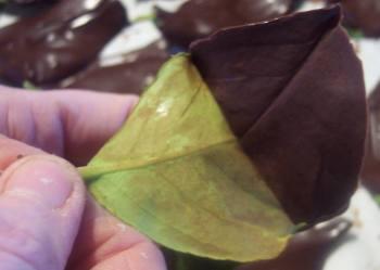 pull-leaf-1.jpg