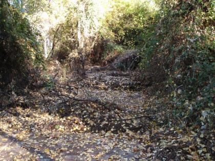 creekcleanup02