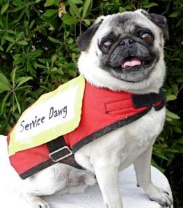 servicedawg