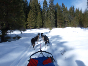 sled-dogs-1