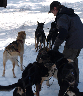 sled-dogs-4