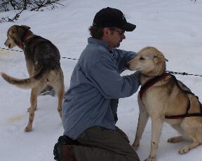 sled-dogs-7