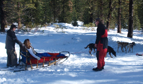 sled-dogs-9