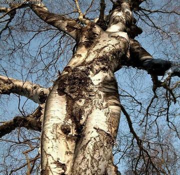 tree-goddess-march-1