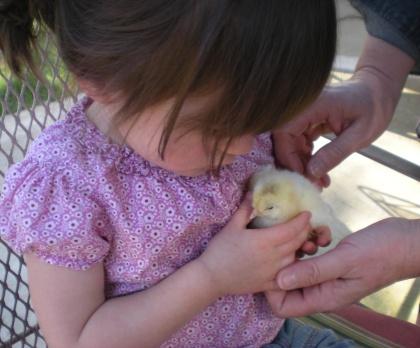 may-chick