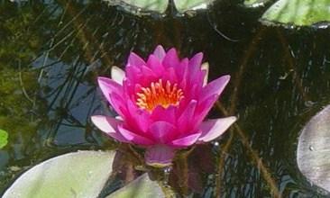 flower-in-arboretum