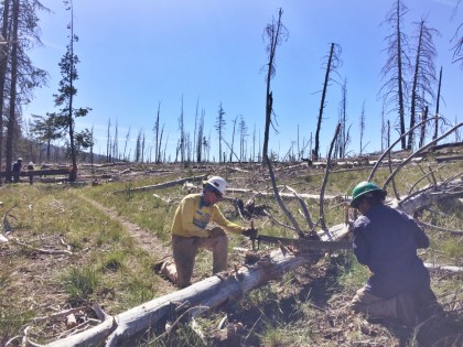 PCTA volunteers John LePouvoir and Javier Nieves cross cut bucking a fallen tree on the Pacific Crest National Scenic Trail within Lassen Volcanic Park near Soap Lake on June 16th.