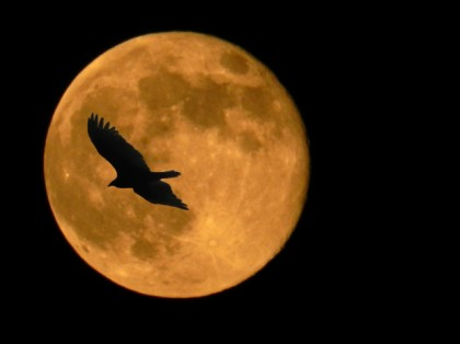 crow and full moon
