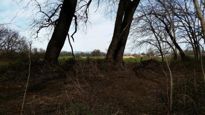 riverland woods