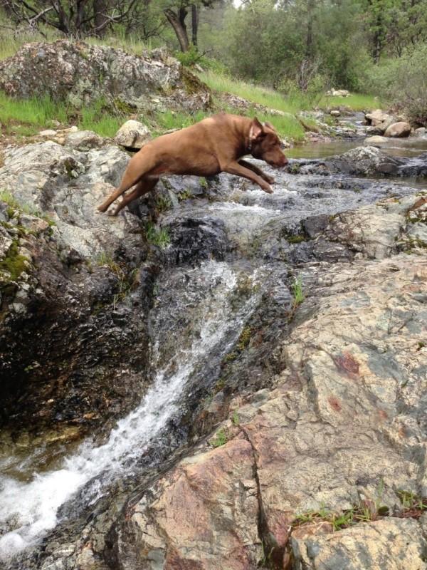 Hazel leap