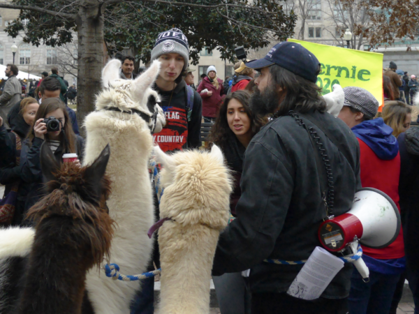 At McPherson Square, end of the march, this guy, obviously an organizer with his bullhorn and route map, shows off three alpacas. And wore a live dove on his shoulder.