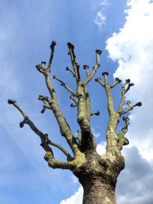 pruning Morguefile