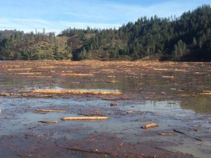 woody debris on lake