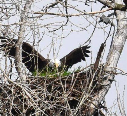 eagle next