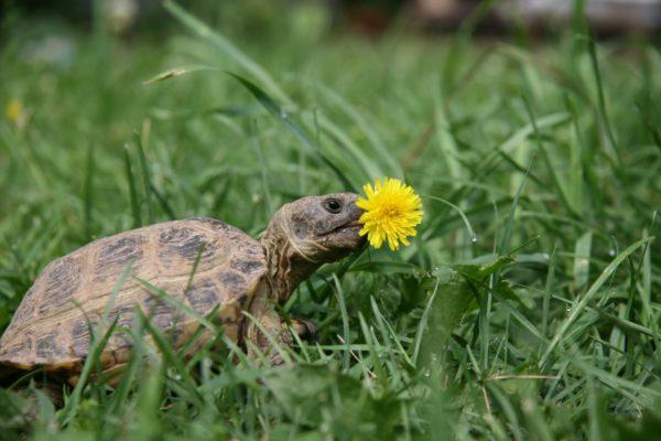 tortoise morguefile