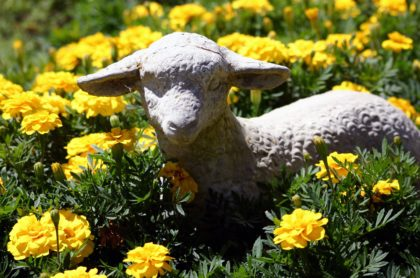 Doni had a little lamb ...