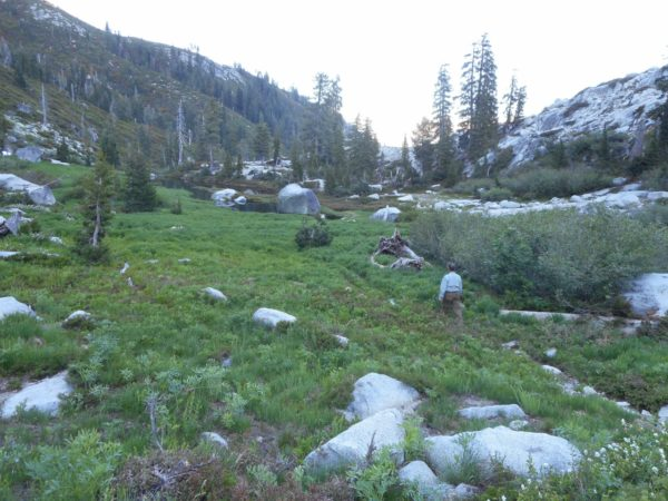 meadow J (1280x960)