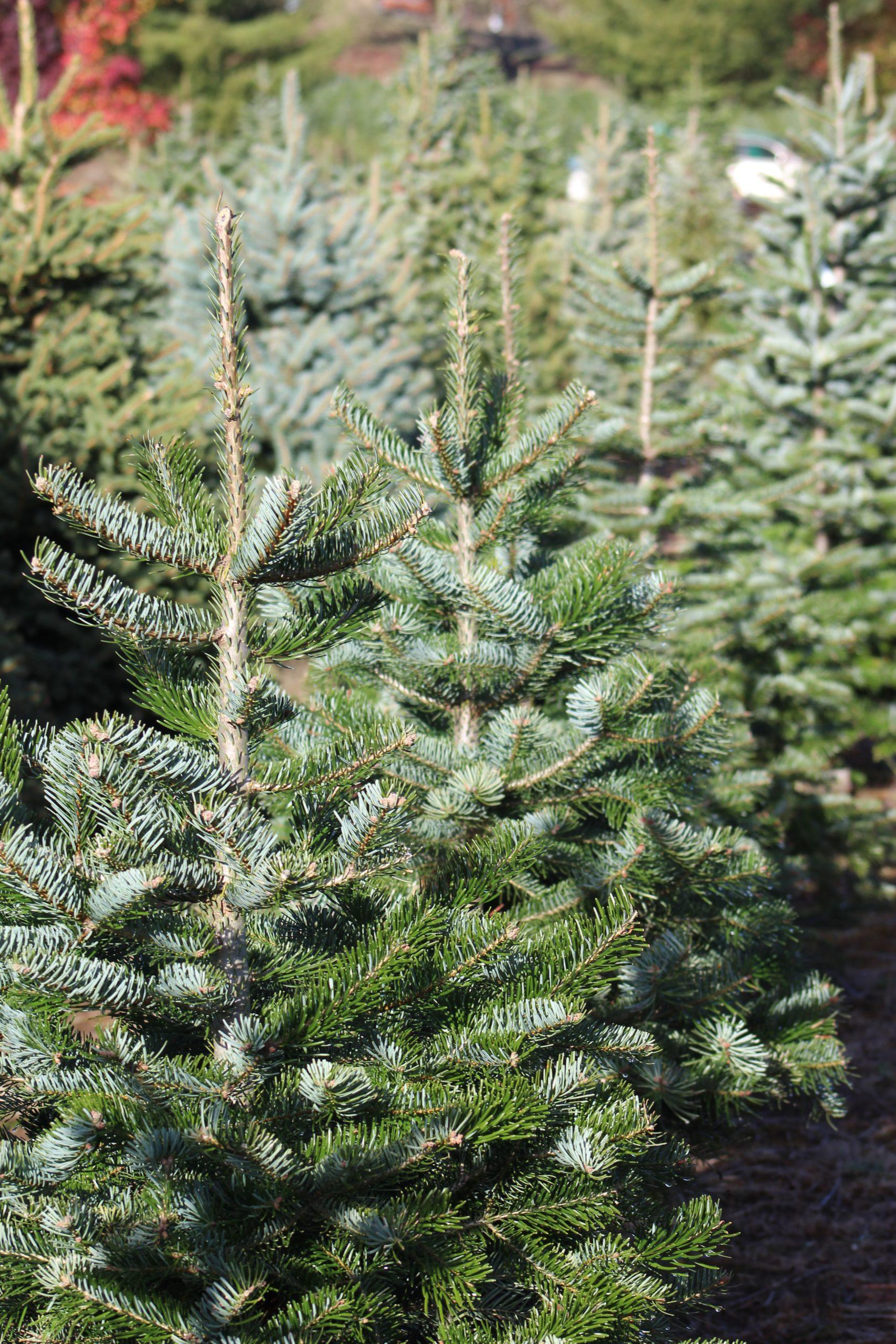Christmas tree photo by David Boozer on Unsplash